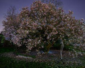 flower-tree-maniquin-w.jpg