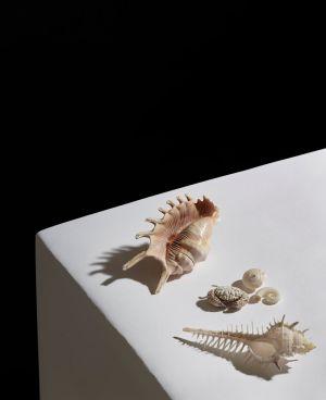 Shells-final-2-web.jpg